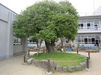 ひいらぎの木